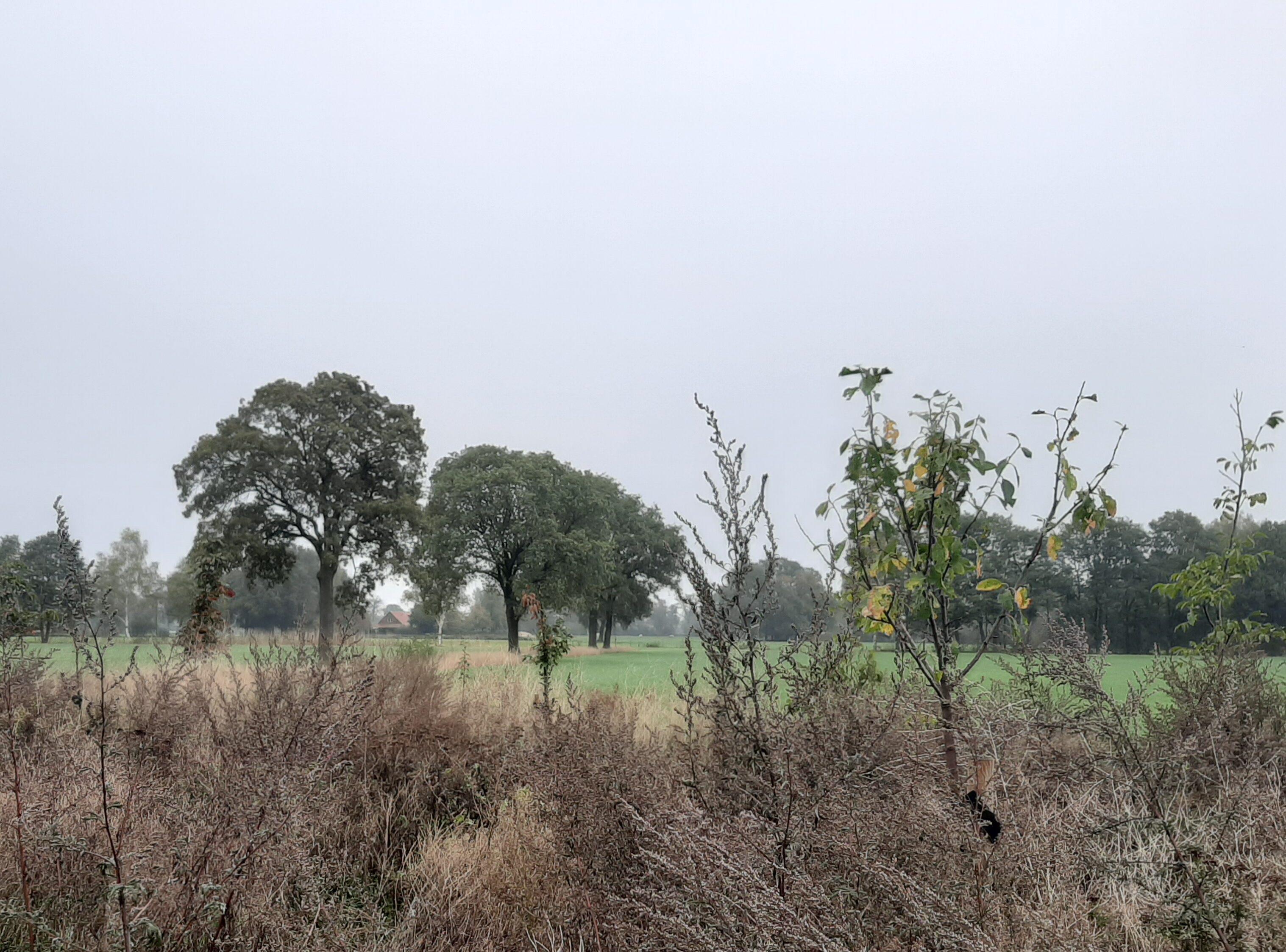 Natuurinclusief kringlooplandbouw voedselbos Achterhoek